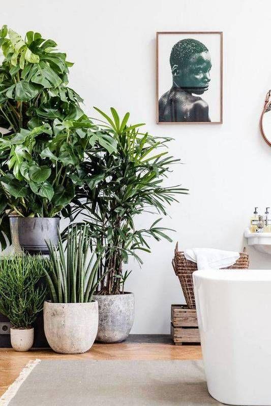 The next big interior trend: Bathroom with plants The next big interior trend: Bathroom with plants The next big interior trend: Bathroom with plants abd0ff5b2f67c7b380b6a2a3c85f2d5e