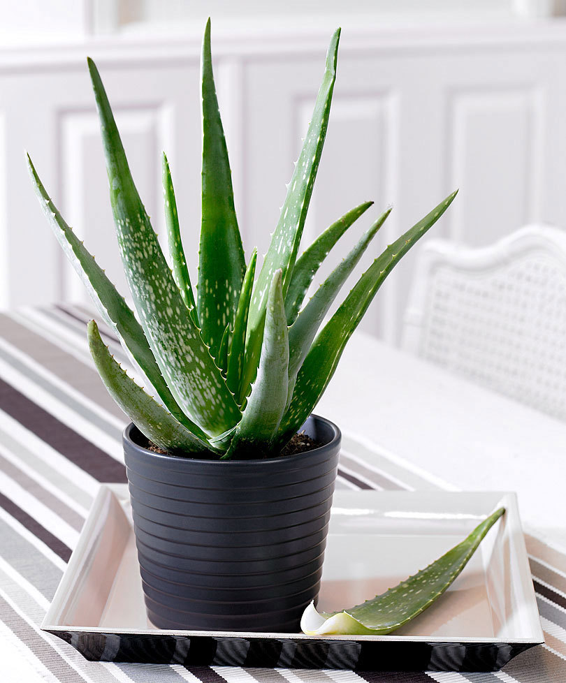 Go Green: The perfect 3 plants for your Bathroom.Bathroom.green.#AloeVera#InteiorDesign#Bamboo. Read more:http://www.maisonvalentina.net/en/inspiration-and-ideas/sem-categoria/green-perfect-plants-bathroom plants Go Green: The perfect 3 plants for your Bathroom 96385 02 BAKIE 20150708103851