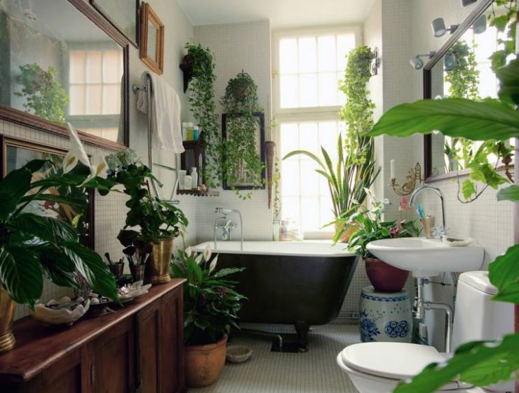 plants Go Green: The perfect 3 plants for your Bathroom bathroom plants lush 740x560