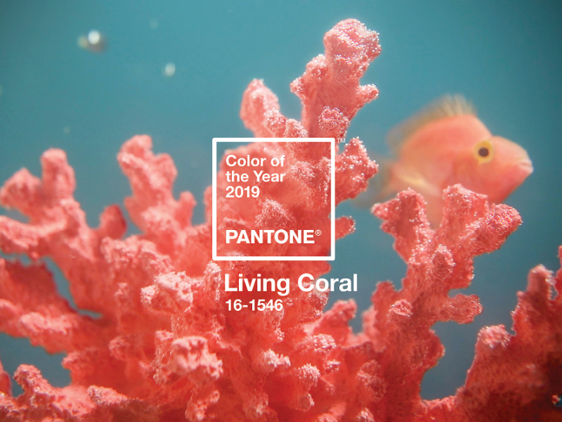 "the color of 2019 is chosen: it is the The Color of 2019 is Chosen: It is The ""Pantone 16-1546"", Also Known as ""Living Coral"" pantone 2019"